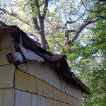 Roof deterioration.